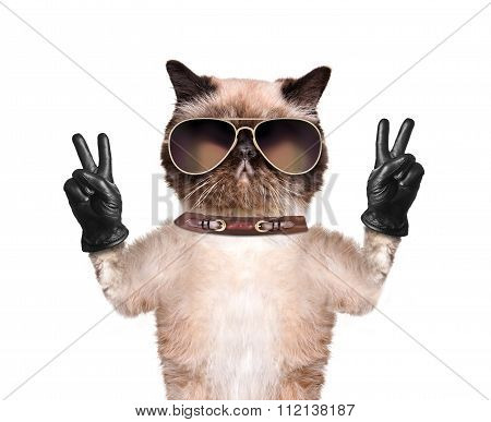 Cat with peace fingers in black leather.