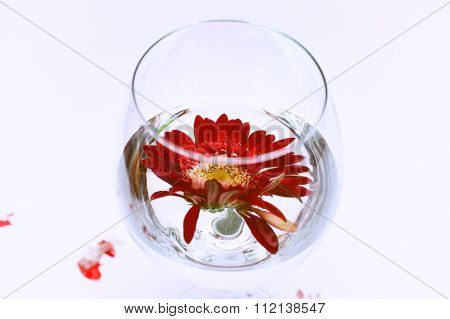 Wine Glass With Water And Red Gerbera