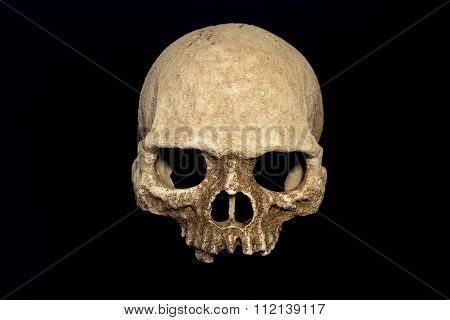 Primate Skull Isolate Black Background