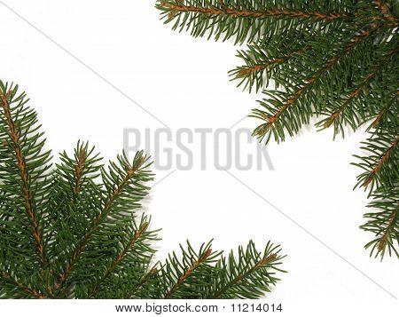 Spruce Frame