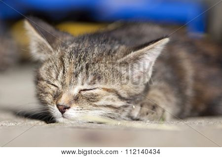 Young cute baby tired cat