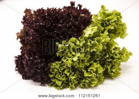Green fresh bunch of a lollo rosso and lettuce  on a white background. The best healthy breakfast for the modern person.