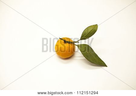 Fresh juicy tasty Sicilian tangerine with a foliage branch on a white background