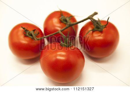 Fresh branch of red Sicilian ripe tomatoes on a white background.