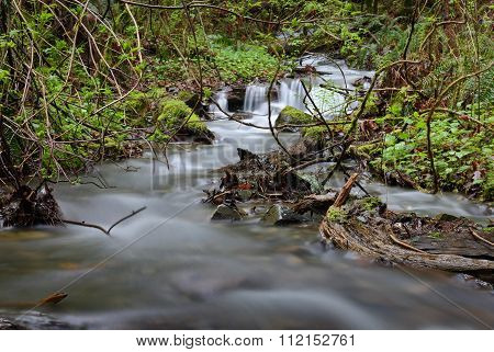 Pacific Northwest Rainforest Rushing Creek