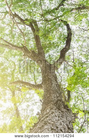 Tree Branch Of Green Leaves On A Big Tree, Nature Background With Filter Color