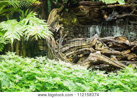 Minimal Tropical Garden With Waterfall