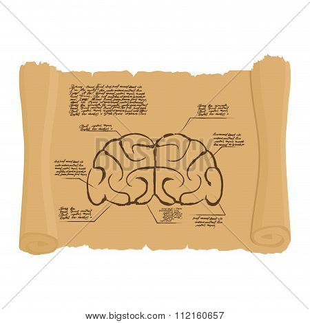 Brain Of Old Scroll Drawing. Old Brain Diagram. Archaic Human Anatomy Project. Illustration In Style