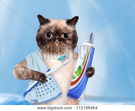 Brushing teeth cat.