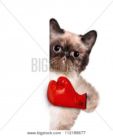 Cat with big red gloves.
