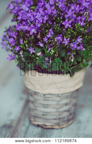 Purple decoration flower in flowerpot on vintage wooden table, filtered image
