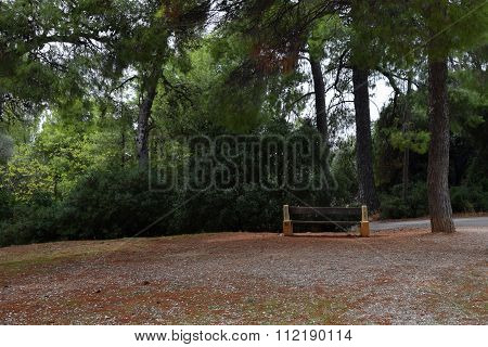 Bench And Trees In Park