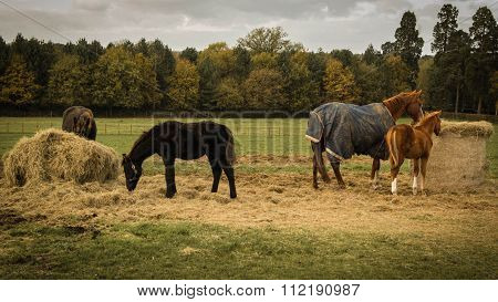 Four horses on field
