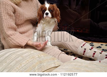 Lady And Dog (cavalier King Charles Spaniel) Enjoying By The Fireplace