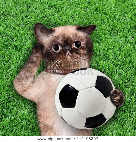 Cat keeps the ball.