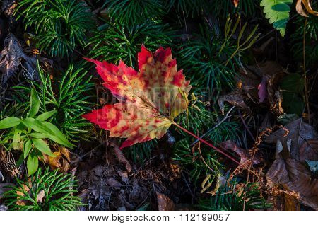 Fallen Leaf On The Forest Floor