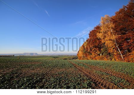 Beautiful View On Autumnal Rapeseed Field In Hesse, Germany