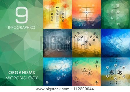 organisms infographic with unfocused background