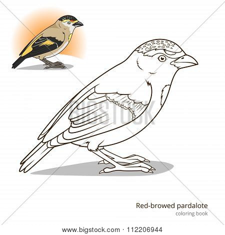 Red browed pardalote bird coloring book vector