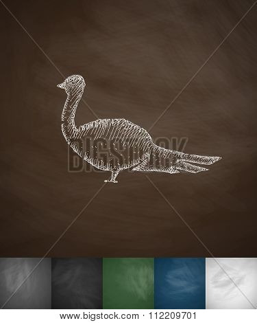 pheasant icon. Hand drawn vector illustration