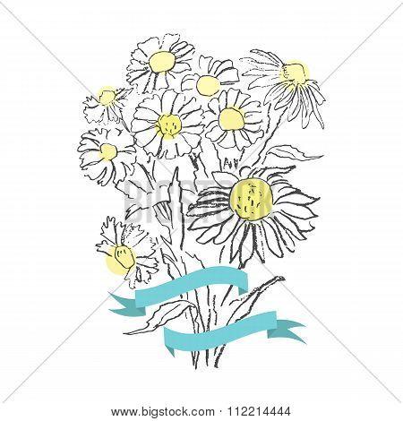 Camomile vector bouquet sketch