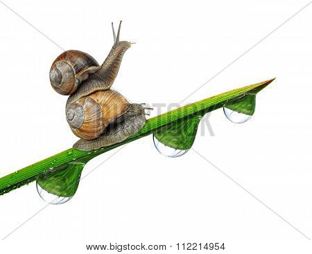 Two snail on dewy grass close up