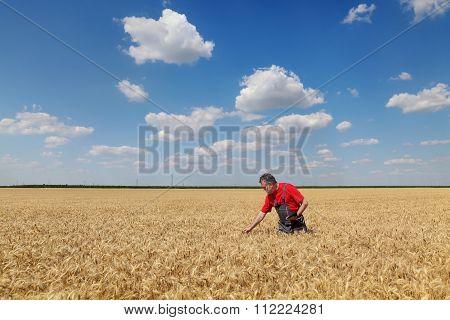 Farmer Or Agronomist Inspect Wheat Field