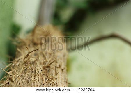 Scratched log