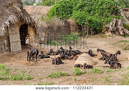Child and goats at entrance of shack