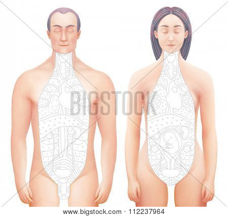 Illustration of excised bodies (man and woman) with drawn outlined inner organs. Perfect to combine with vector images of this set.
