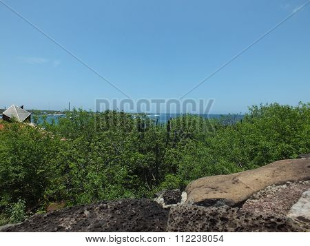 galapagos forest
