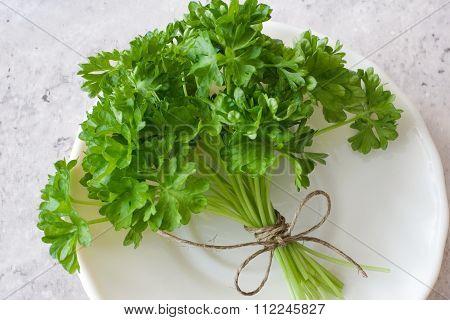Fresh Parsley / Petroselinum Crispum