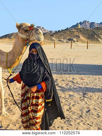 The Bedouin Cameleer