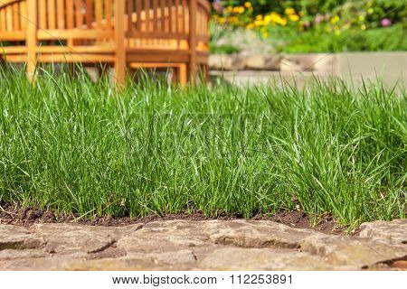 Lawn grass and stones