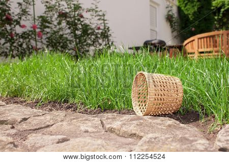 Basket in backyard
