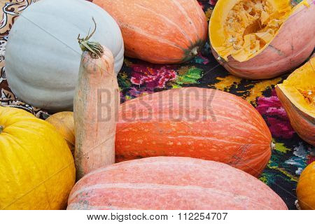 Many colorful pumpkins