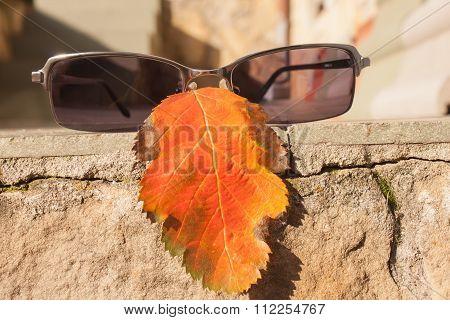 Leaf and sunglasses