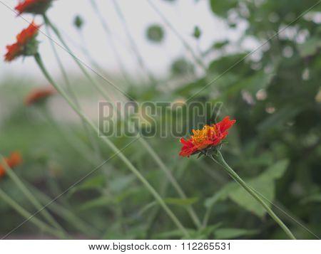 The Flowers In My Garden