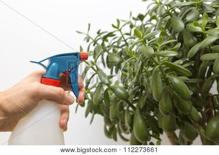 Hand Sprays Water On Indoor Plant