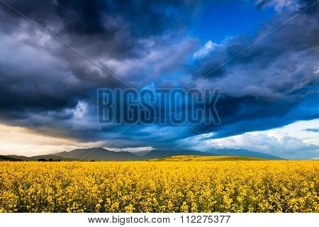 Rapeseed Fields With Dramatic Stormy Clouds