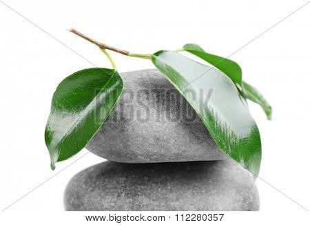 Rubber plant and spa stone isolated on white