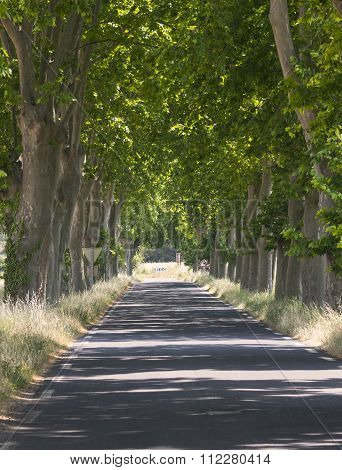 Road With Big Trees In France