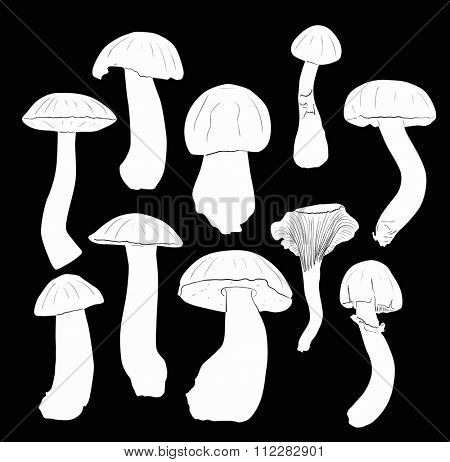 illustration with fungus silhouettes isolated on black background