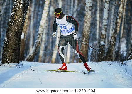 male skiers race classic style in birch forest in winter
