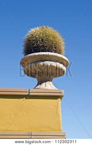 Big Cactus In A Vase On A House Wall