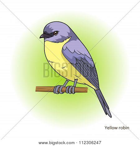 Yellow robin bird educational game vector