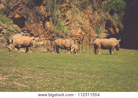 African Rhinoceroses (diceros Bicornis Minor) On The Masai Mara National Reserve Safari In Southwest