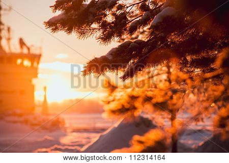 branch in snow and sunlight. Winter sunset in the park
