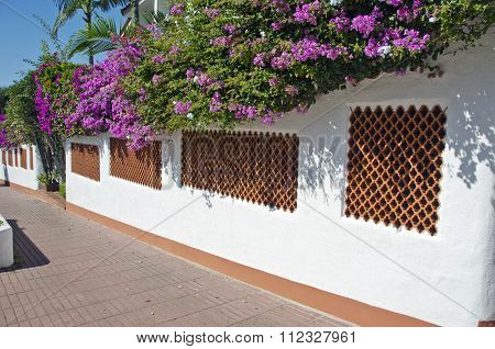 Spanish Fence With Bougainvillea