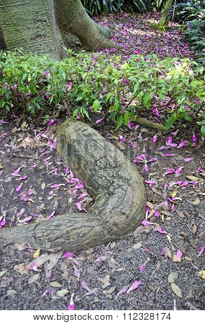 Tropical Tree Roots With Pink Petals Fallen On Ground